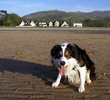 Laddie on the Lavan Sands by Michael Haslam