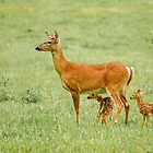Momma deer with two fawns by canonman7D