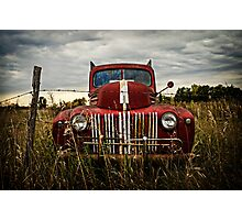 Put Out To Pasture  Photographic Print