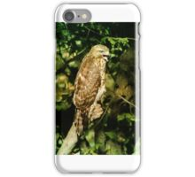 North Side Hawk in his Glory iPhone Case/Skin