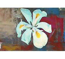 White Lily - Painted Photographic Print
