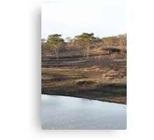 South Africa landscape - the Fever tree Canvas Print