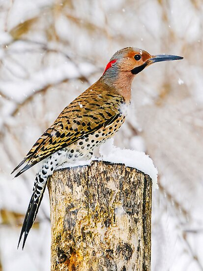 common flicker 3 2010 by canonman7D