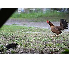 Kitten vs. Rooster Photographic Print