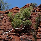 in Cycad Gorge - looking up  by gaylene