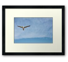 ...learning to fly... Framed Print