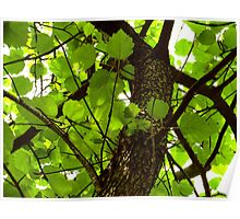 Autumn Glory Hawthorn Poster