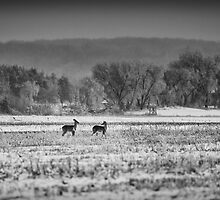 Late Winter Whitetails by Thomas Young