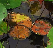 Autumn Lotus Leaves by Shawna Rowe