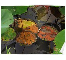 Autumn Lotus Leaves Poster