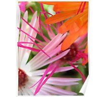 Mesembryanthemum Scribbles Poster