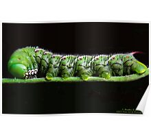 Katy Katerpillar Ate All The Leaves! Poster