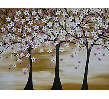 brown white pink trees with cherry blossom blossoms  Photographic Print