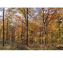 Infinity - Wendover Woods Photographic Print