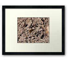 Common Bee-Fly in Flight Framed Print