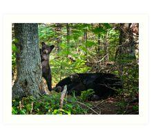 Curious Siblings. Black Bear Cubs. Art Print