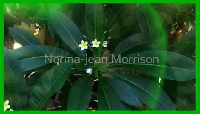 """""""Shining Bright"""" by Norma-jean Morrison"""