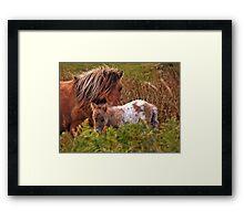 Beautiful Foal Framed Print