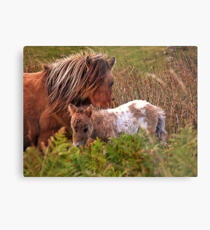 Beautiful Foal Metal Print