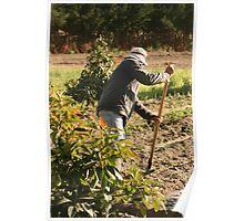 Ecuadorian Farmer Irrigating Fields Poster