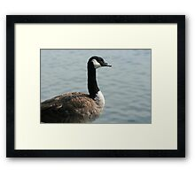 Goose Next To a Lake Framed Print