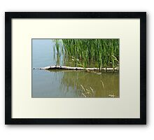 Reeds and Logs in a Marsh Framed Print