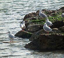 Gulls Rock  Okay by lynn carter