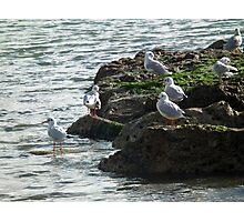 Gulls Rock  Okay Photographic Print