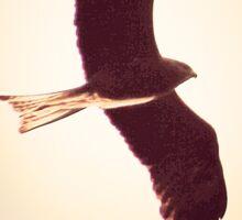 Black falcon beauty Sticker