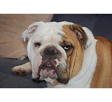 Bully Bob 4 Photographic Print