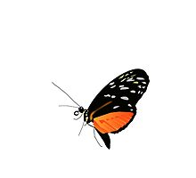 Black And Orange Butterfly by kwg2200