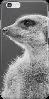 Meerkat (Suricata suricata) by ChrisMillsPhoto