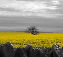 Beadnell, Northumberland by peely20