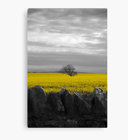 Beadnell, Northumberland Canvas Print