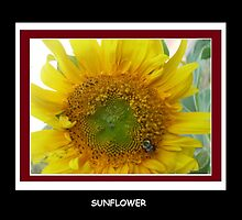 SUNFLOWER by ItsAnOddWorld