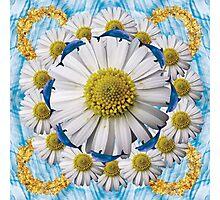 crazeed daisies Photographic Print