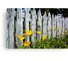 Wood Fence And Daffodils Canvas Print