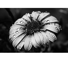 Flowerpower Double Black & White Photographic Print