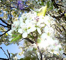 Sparkling Petals by JD-Designs