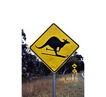 Skiing kangaroo Photographic Print
