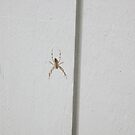 Jumping Jacks via spider by AuntieBarbie