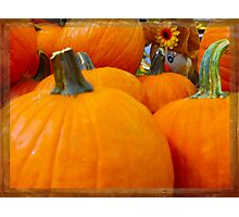 Hiding in the Pumpkin Patch Photographic Print