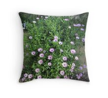 Cascading Daisies first day of Spring. 'Arilka' Mount Pleasant. Throw Pillow