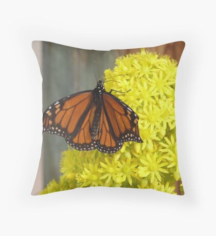 Monarch Butterfly on 'Aeonium' flower head, 'Arilka' Mount Pleasant. Throw Pillow