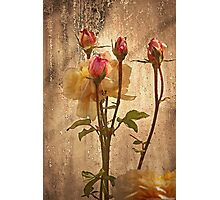 Window Roses   Photographic Print