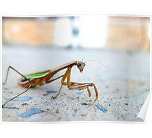 Mantis praying Poster