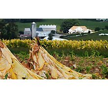 Tobacco Harvest has Begun_Lancaster County Pennsylvania Photographic Print