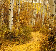yellow aspen leaves on country road by printscapes