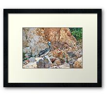 Lonely wild brown pelican HDR Framed Print