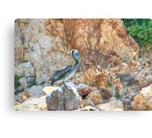 Lonely wild brown pelican HDR Canvas Print